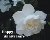 Happyanniversarygardenia2